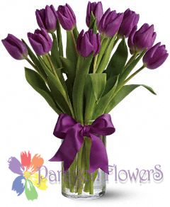 Spring Purple Tulips